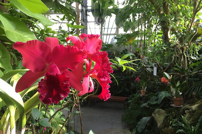 温室では南米原産のヘリコニアなど、珍しい草花や熱帯の雰囲気を楽しめる