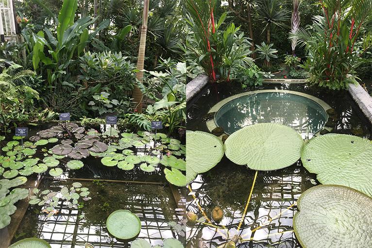 温室では熱帯の雰囲気を楽しめる