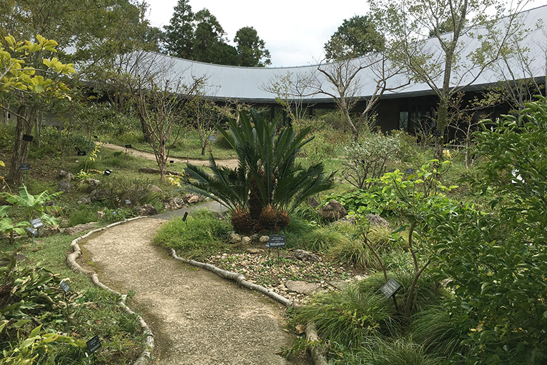 展示館内の中庭は牧野博士ゆかりの植物がいっぱい