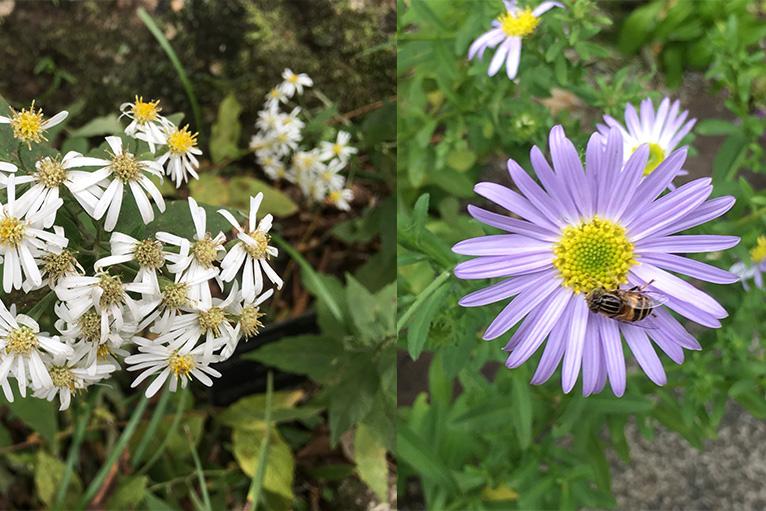 四季折々に、可憐で美しい草花が咲く