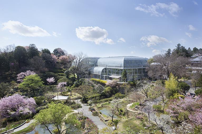 春には桜が咲き誇り、美しい庭園を散策しよう