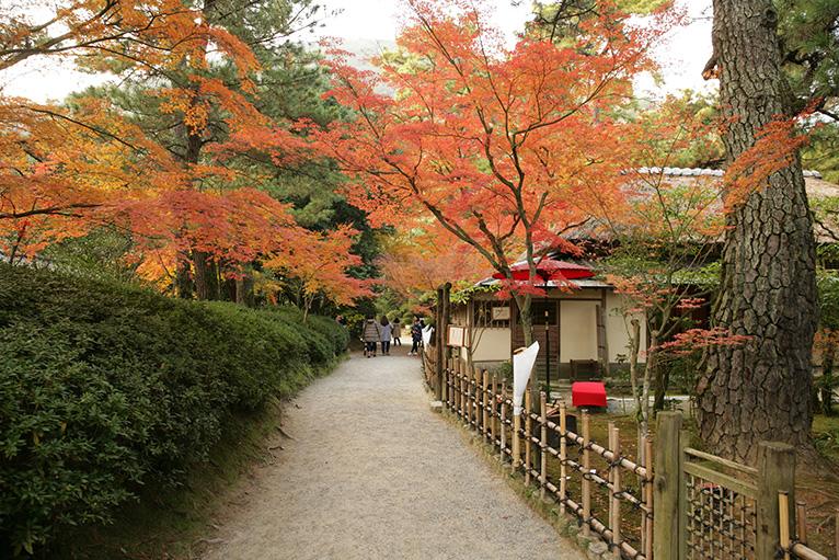 明治初期に建てられた石州流の茶室、日暮亭と紅葉。のんびり散策しよう。