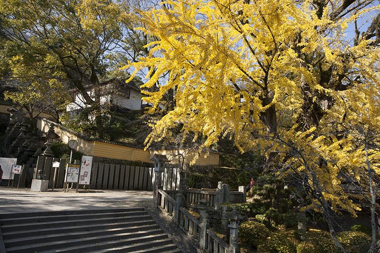大きな鳥居の桜馬場西詰胴鳥居付近は紅葉もきれい。