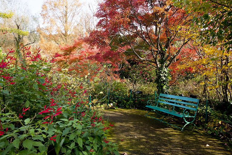 モネが愛した睡蓮の庭「水の庭」、ベンチで寛ごう。