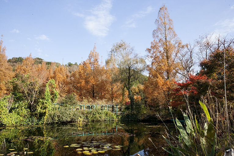 「水の庭」を周遊すると、どこからも美しい景色が楽しめる。