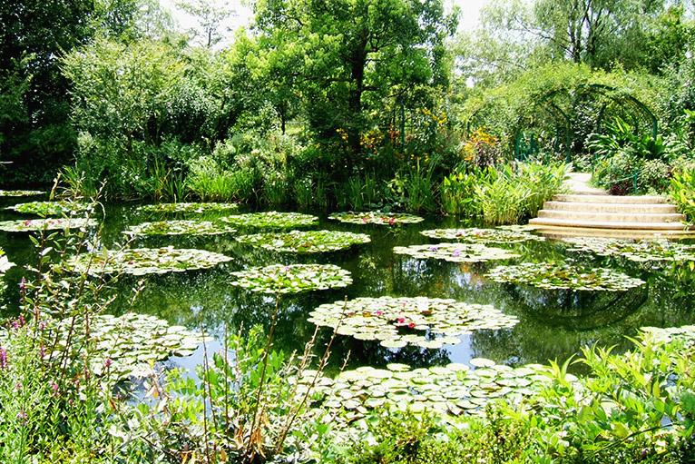 4月から10月にかけて、「水の庭」ではモネが愛した睡蓮の花が咲く。