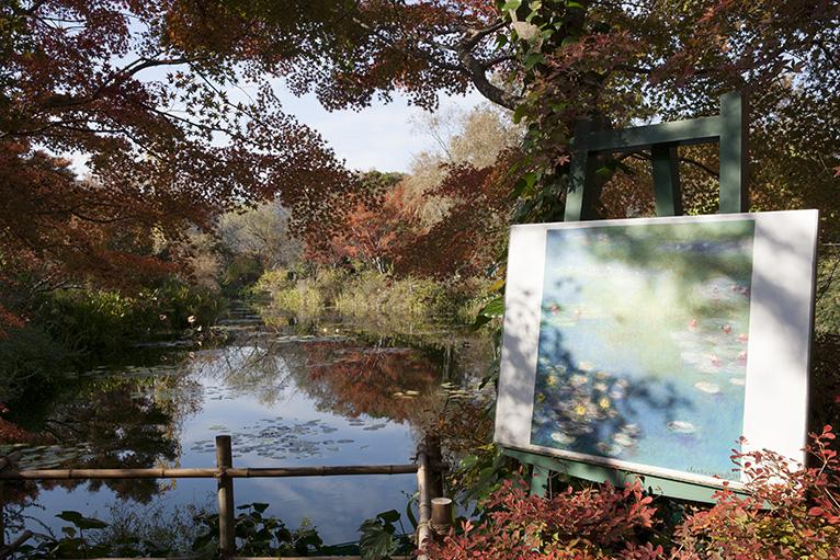 モネが愛した睡蓮の庭「水の庭」、睡蓮の花もきれいだが紅葉もきれい。