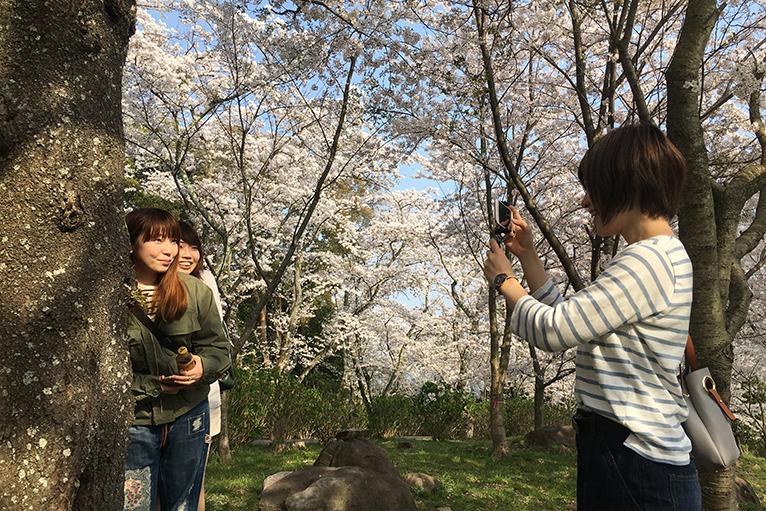 紫雲出山の桜の木の下で楽しい写真をパチリ