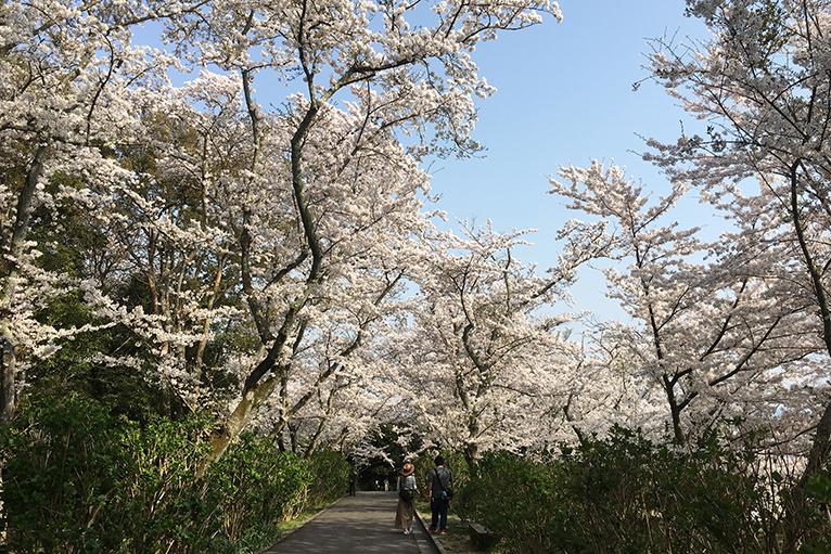 大きな桜の下をのんびり