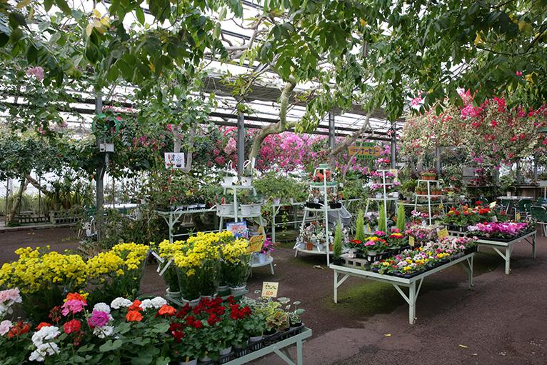 色々な花が咲き誇る店内
