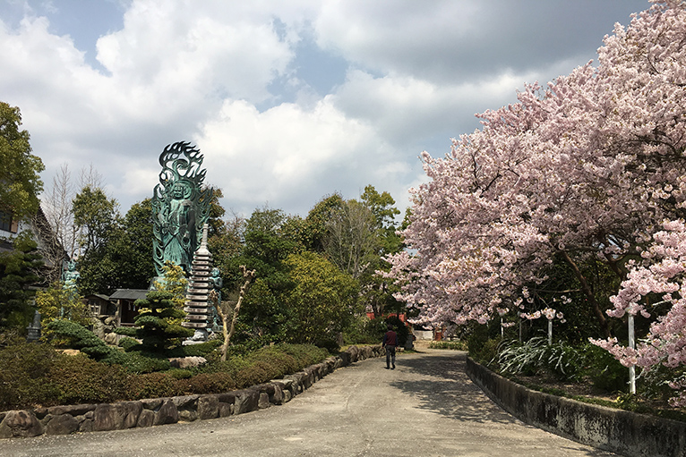八百萬神々御殿の桜並木