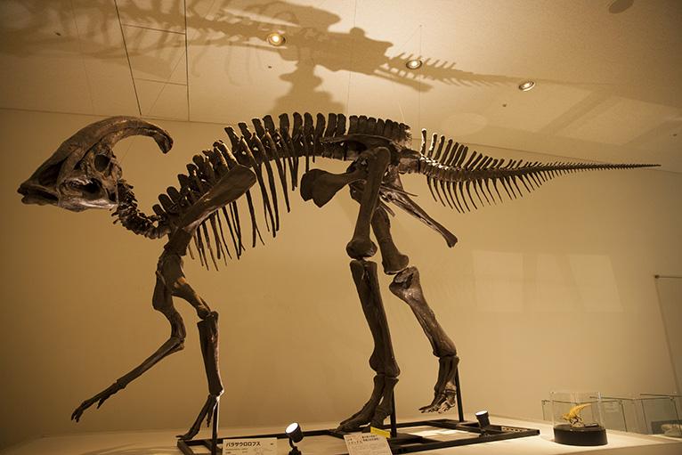 貴重な恐竜の骨のレプリカ