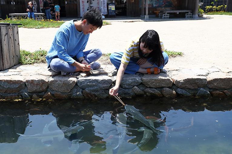 リラックスして、海の魚が泳ぐ汐江川で餌やり体験