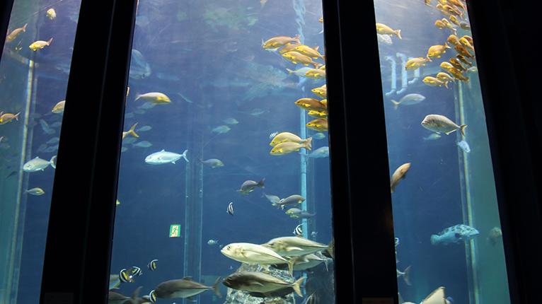 海洋館、現在工事中だけど鑑賞できる