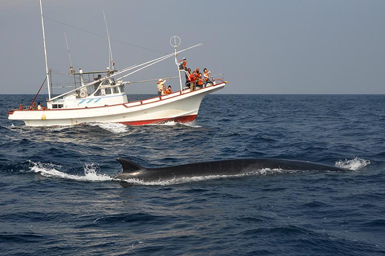 ニタリクジラが間近に見る