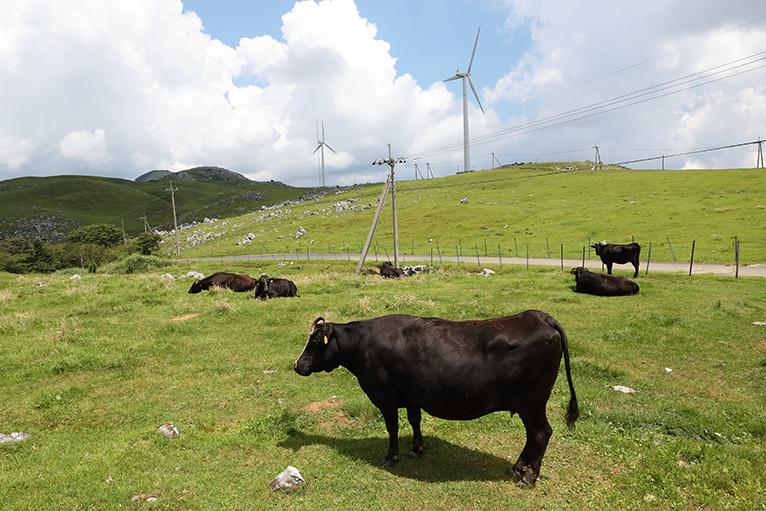 放牧された牛と風車、高原ののどかな風景が広がる