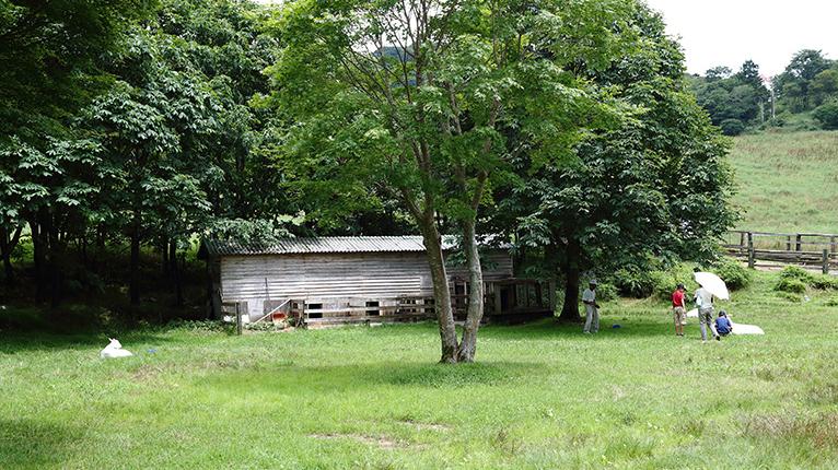 もみの木の横にあるポニー牧場