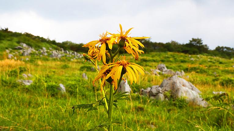 インスタ映えに1枚。高山植物は見どころの一つ