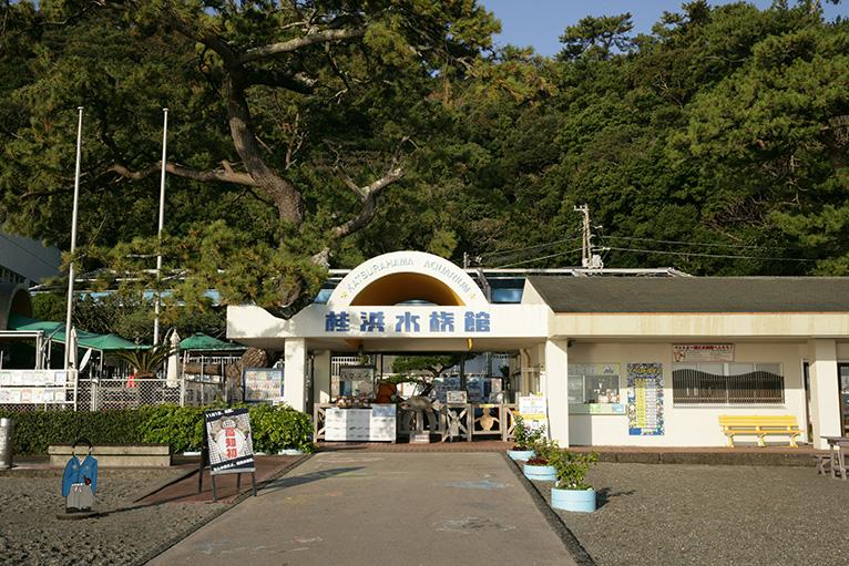 桂浜水族館やお土産店、土佐闘犬も見学できる